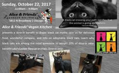 Join Our First Fundraising Event – Black Cats Rule!