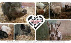 Fundraising for Have A Heart Farm